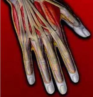 Fisiologi dan Anatomi Latihan